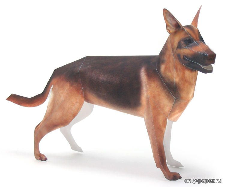 research paper on german shepherds Right breed for you german shepherd dog information including personality, history, grooming, pictures, videos, and the akc breed standard.