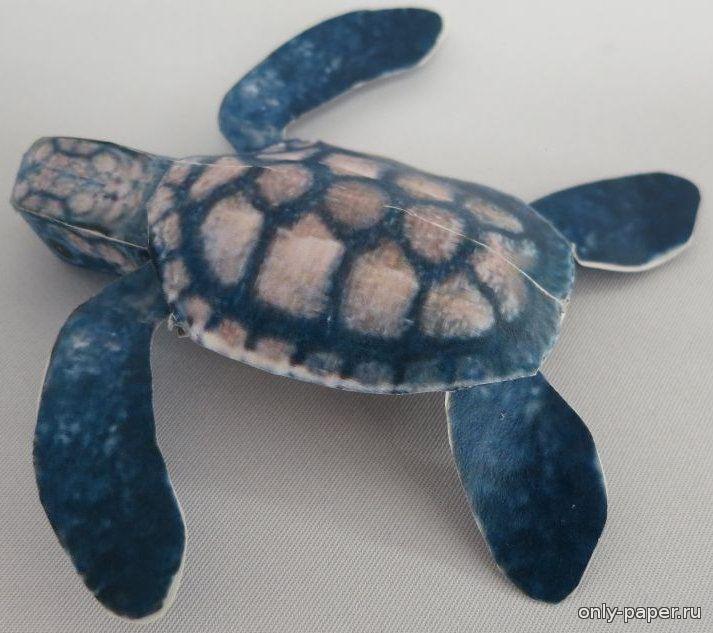 Черепаха из картона своими руками 48