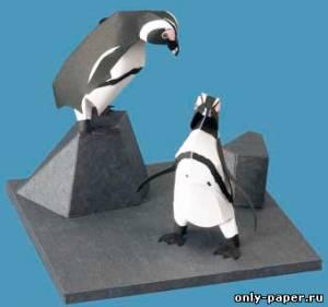 Модель Африканского пингвина из бумаги/картона