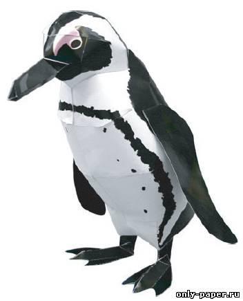 Название: Пингвин